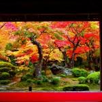 【京都】一度は見たい絶景の紅葉スポット!