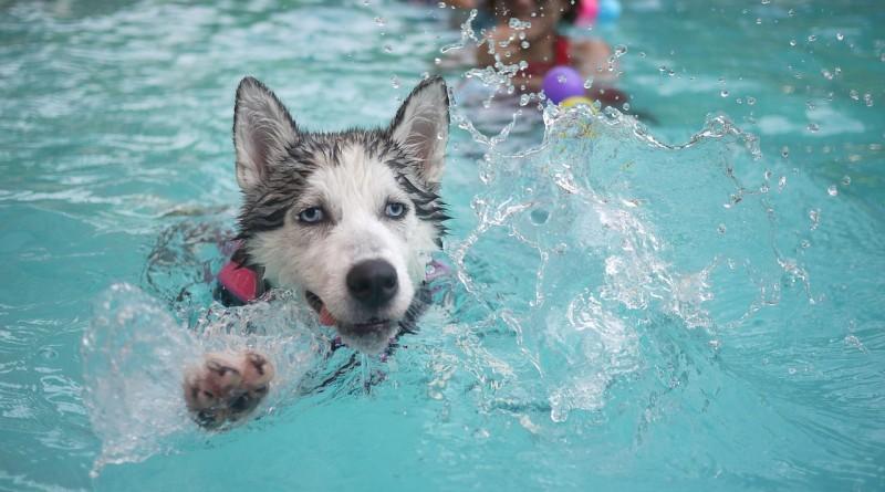 dog-168815_1280